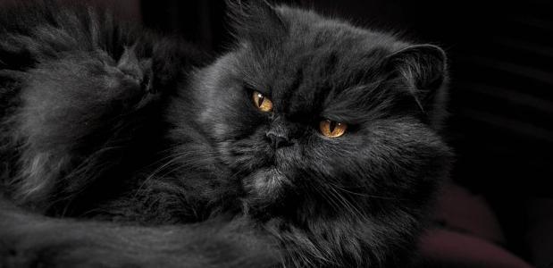 Geschiedenis van de huiskat