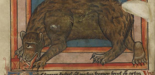 Betekenis ongelikte beer