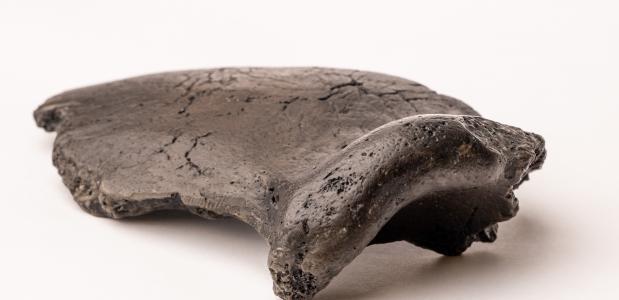 Neanderthaler Krijn wenkbrauwboog
