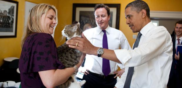 Larry de kat in politieke functie
