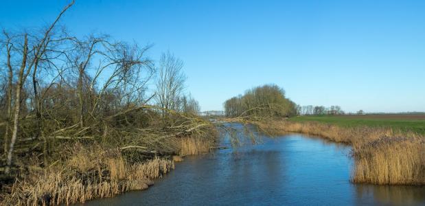 Nieuwe Dordtse Biesbosch