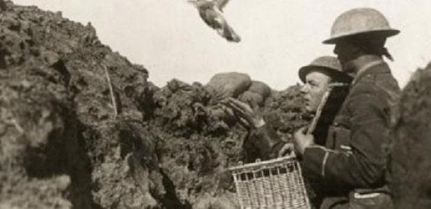 Postduiven in de Eerste Wereldoorlog