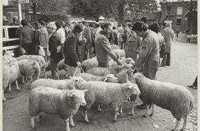 ritueel slachten Nederland