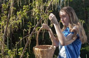 Spaghetti plukken van een spaghettiboom