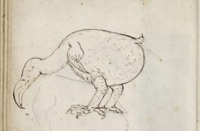 uitgestorven dodo