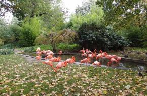 Jardin des plantes, Parijs