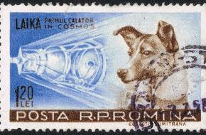 Laika, eerste reiziger in de cosmos (Wikimedia Commons)