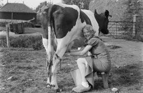 Melkproductie in 1933