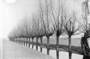Wilgenbomen aan het water in Opheusden. Bron: Nationaal Archief, Fotocollectie Nederlandse Heidemaatschappij.