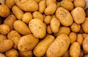 geschiedenis van de aardappel