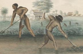 Afrikaanse slaven aan het werk op een plantage.
