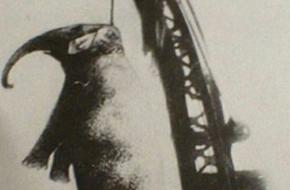 Olifant Mary opgehangen