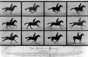 Muybridge. Horse in Motion