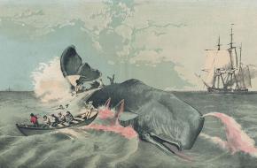 geschiedenis van de walvisjacht