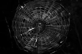 Spin in het web.