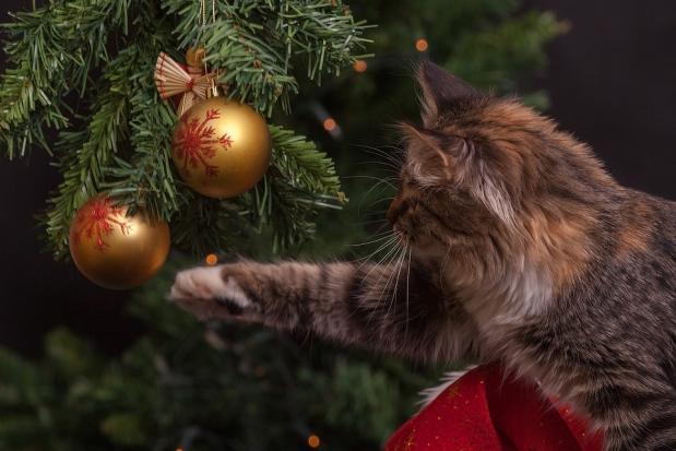 Kerstdossier Alles Wat Je Wil Weten Over Kerst Isgeschiedenis